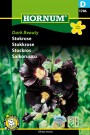 Stokkrose 'Dark Beauty' (Alcea rosea) thumbnail