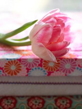 Tulipan Doble